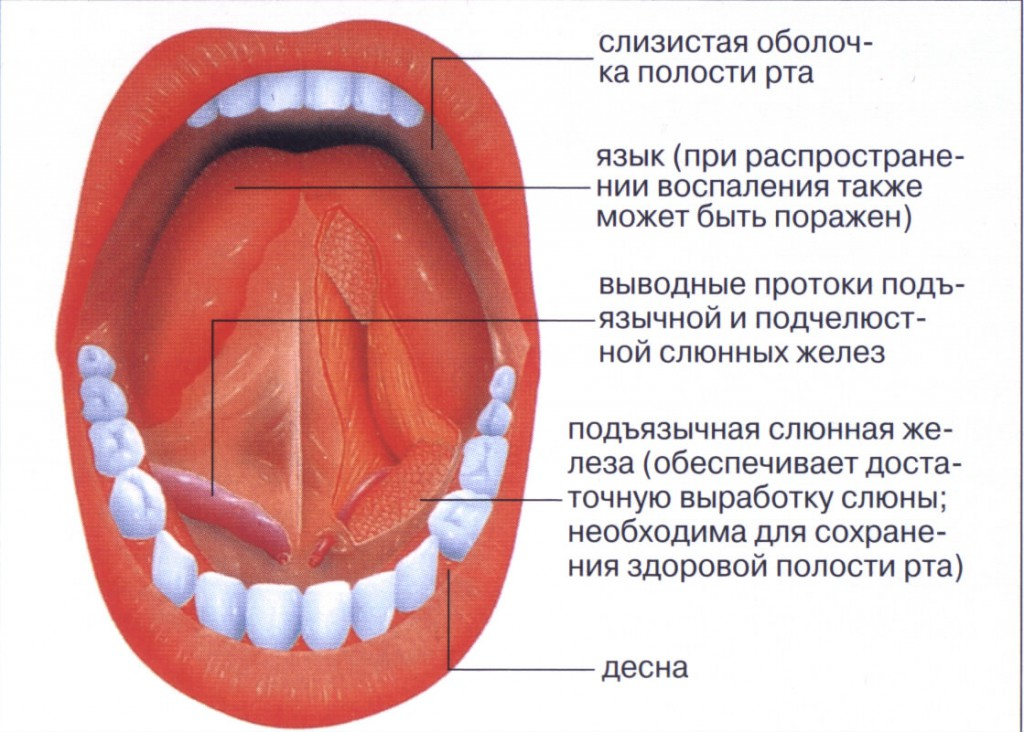 Как лечить стоматит на десне у взрослых во рту