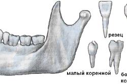 Виды зубов