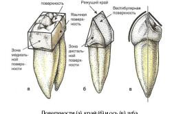 Поверхности зуба