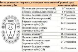 Таблица прорезывания зубов