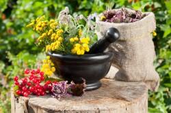 Лекарственные травы для лечения различных видов стоматита