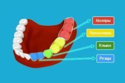 Рисунок 1. Порядок расположения зубов